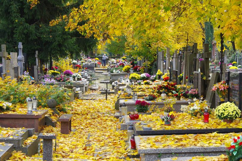 Cmentarz; zdj. ilustracyjne /Marek Bazak /East News