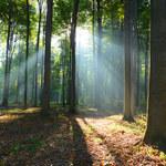 Co czyha na nas podczas wędrówek w lesie?