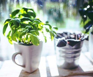 Co dolega twoim roślinom?