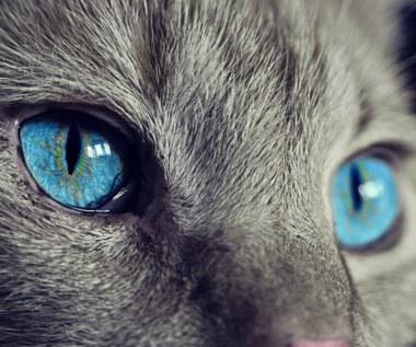 Co powinieneś wiedzieć, zanim zabierzesz swojego kota na odrobaczanie?