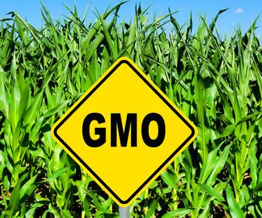 Co powinniśmy wiedzieć o GMO?