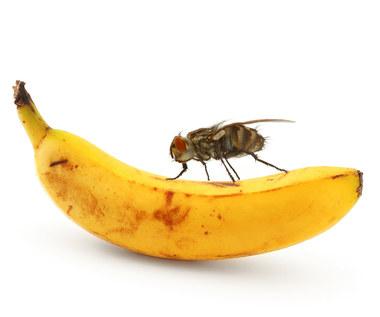 Co się dzieje, kiedy mucha siada na twoim jedzeniu?