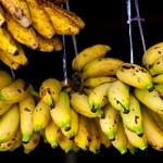 Co się stanie, gdy zjesz banany z czarnymi plamkami na skórce?