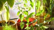 Co szkodzi roślinom zimą