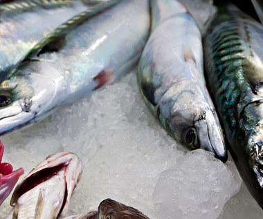 Co warto wiedzieć o makreli?