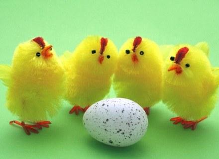 Co wykluje się z jajka?
