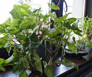 Co z domowymi roślinami, gdy jesteś na urlopie?