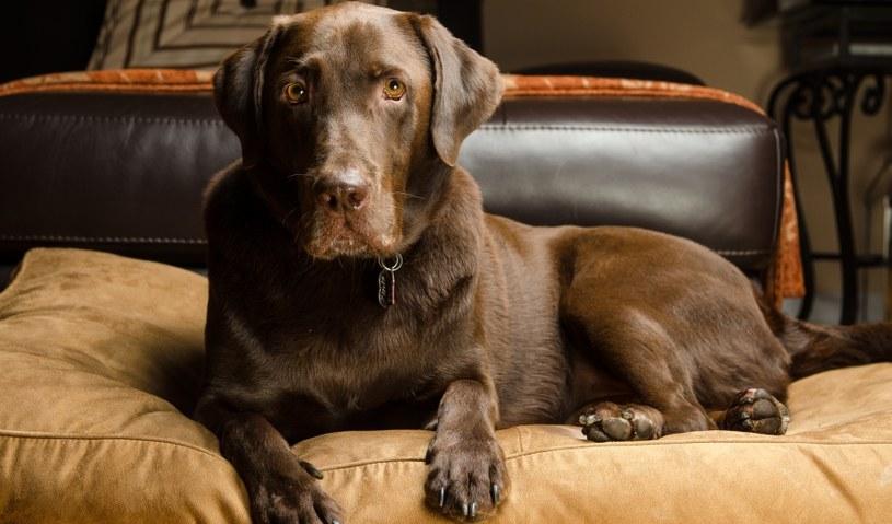 Co zdradza wygląd sierści psa? /©123RF/PICSEL