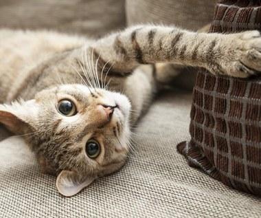 Co zrobić, aby kot przestał drapać meble?