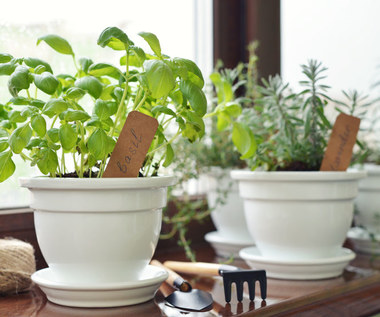 Co zrobić, aby rośliny w domu nie przemarzły?