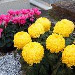 Co zrobić, by przedłużyć świeżość kwiatów na grobach?