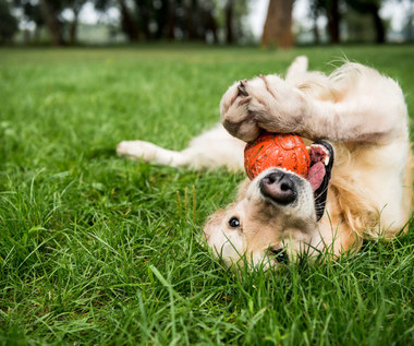 Co zrobić w przypadku urazu pazura u psa?
