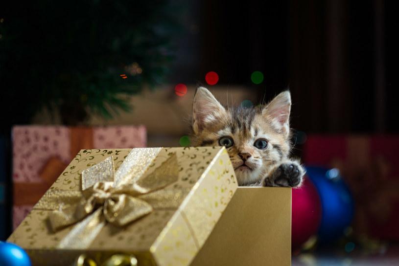 Co zrobić z nietrafionym prezentem? /Ztranger/easyfotostock /East News