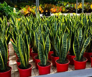 Co zrobić z roślinami kupionymi w markecie?