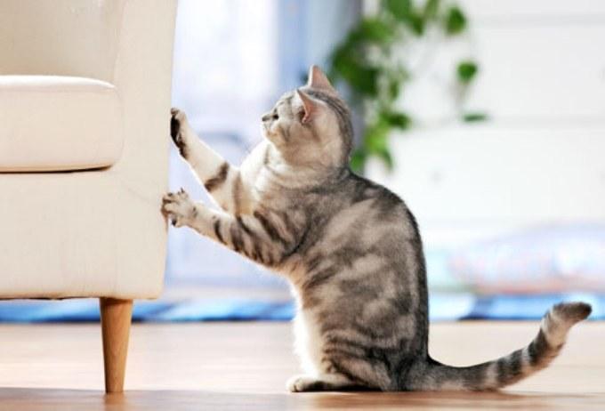 Co zrobić żeby koty nie drapały /© Photogenica