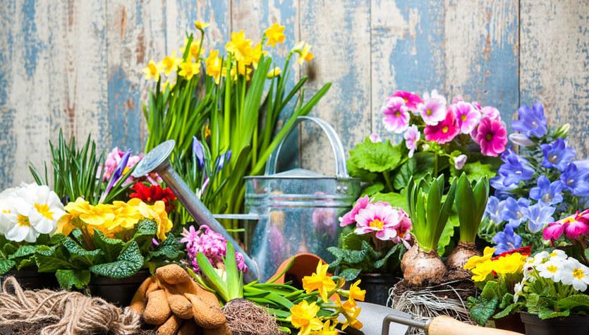 Co zrobić, żeby kwiaty i krzewy w ogrodzie nie przemarzły?