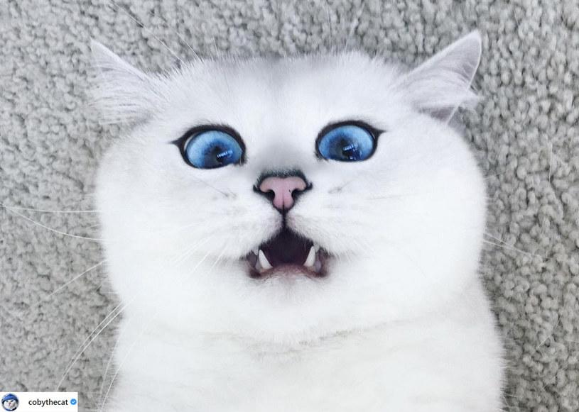 Coby'ego uznano za kota o najpiękniejszych oczach /@cobythecat /Instagram