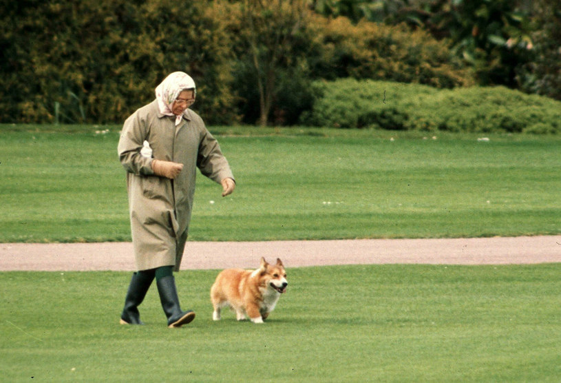 Corgi, charakterystyczne psy o długim tułowiu, dużych uszach i krótkich nogach, towarzyszyły Elżbiecie od 18. roku życia, kiedy otrzymała w prezencie pierwszą suczkę o imieniu Susan. /EastNews /East News