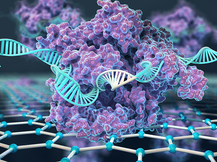 CRISPR-Chip wykorzystuje białko CRISPR-Cas9 przyłączone do grafenowego tranzystora / Kiana Aran /Materiały prasowe