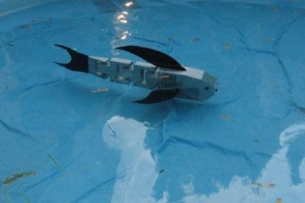 Cyberryba - pływający robot, dla którego inspiracją były żywe ryby /materiały prasowe
