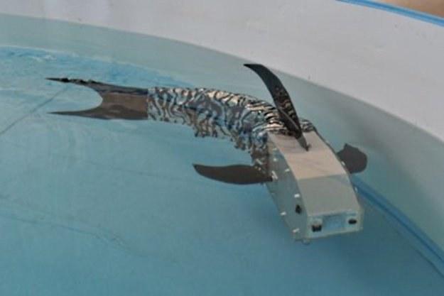 CyberRyba to pierwszy taki robot pływający skonstruowany w Polsce /materiały prasowe