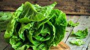 Cykoria czy sałata – co wybrać w marcu?