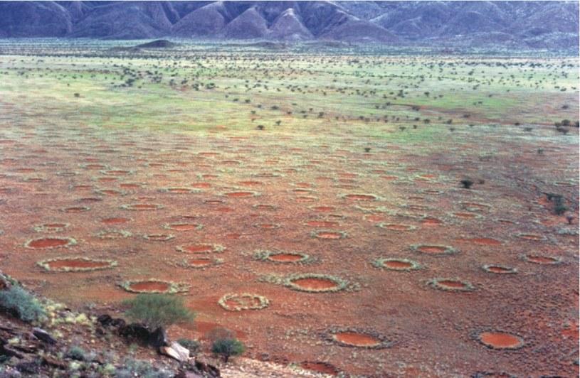Czarcie koło w Namibii. Fot. Stephan Getzin /Wikipedia