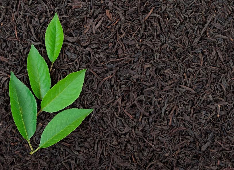 Czarna herbata - możesz ją pić, ale z powodzeniem wykorzystać jako nawóz do kwiatów lub nabłyszczasz do mebli /123RF/PICSEL