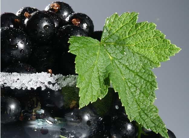 Czarna porzeczka jest bogata w witaminę C /© Bauer