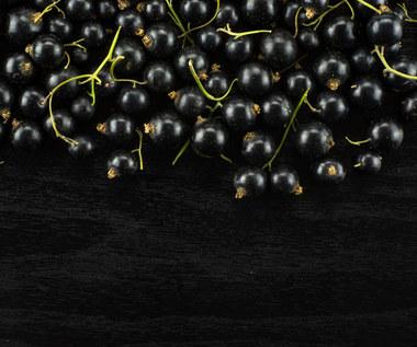 Czarna porzeczka: Wymagania, uprawa, właściwości