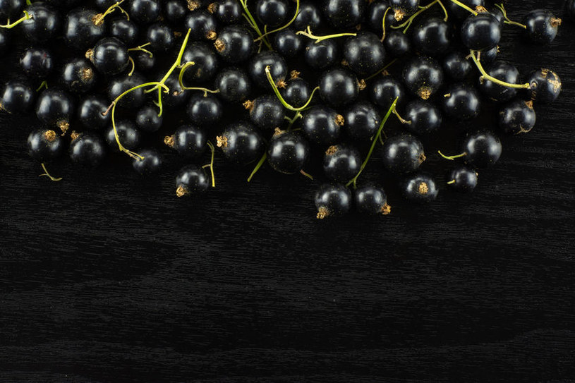 Czarna porzeczka /©123RF/PICSEL