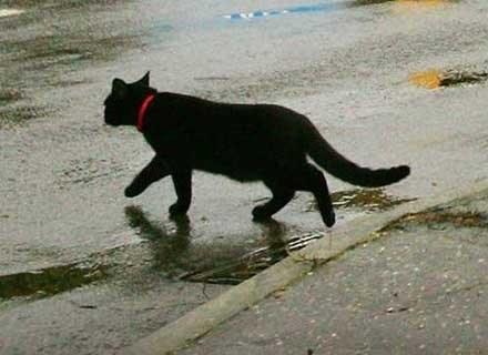 Czarny kot, który przebiegnie nam drogę, to gwarantowany pech /AFP