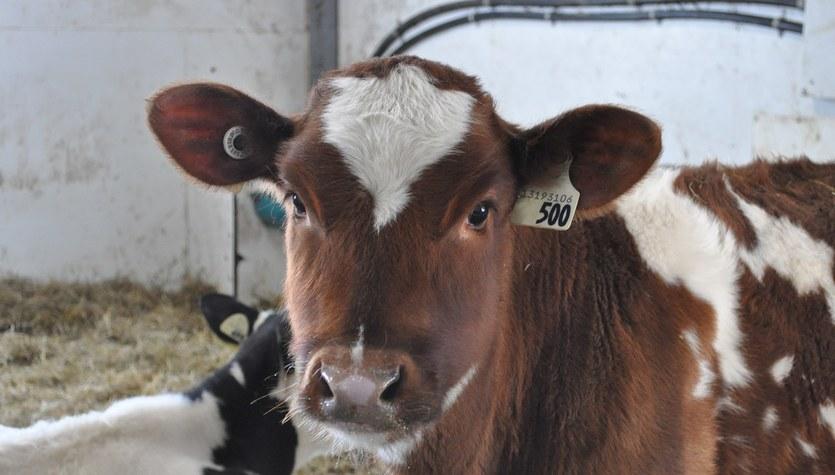 Czarny PR mleka. UE na finiszu negocjacji kontrowersyjnych przepisów
