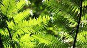 Czarodziejskie rośliny polskie