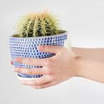Czas kaktusów