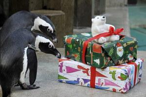 Czas prezentów /AFP