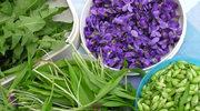 Czas zbierać zioła