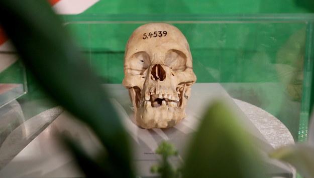 Czaszka jednej z ofiar ludobójstwa w Namibii /HAYOUNG JEON /PAP/EPA
