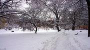 Czechy: Opady śniegu zakłócają ruch