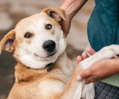 Czego nie znoszą psy? Tych nawyków lepiej unikaj