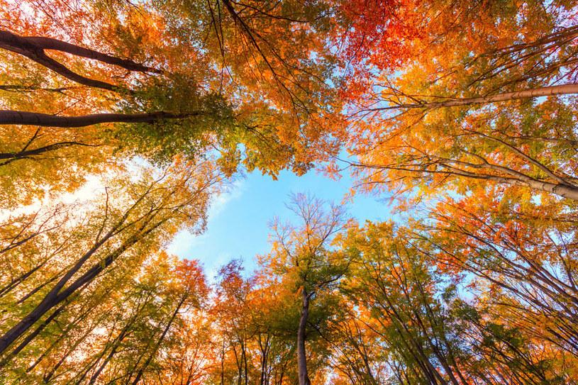 Czeka nas ciepła końcówka września /123RF/PICSEL