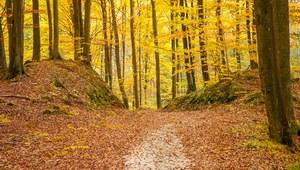 Czeka nas polska złota jesień? Oto prognoza na najbliższe 25 dni