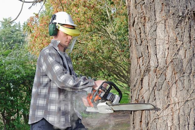 Czeka nas powtórka niekontrolowanej wycinki drzew? /©123RF/PICSEL