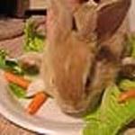 Czemu winien królik?