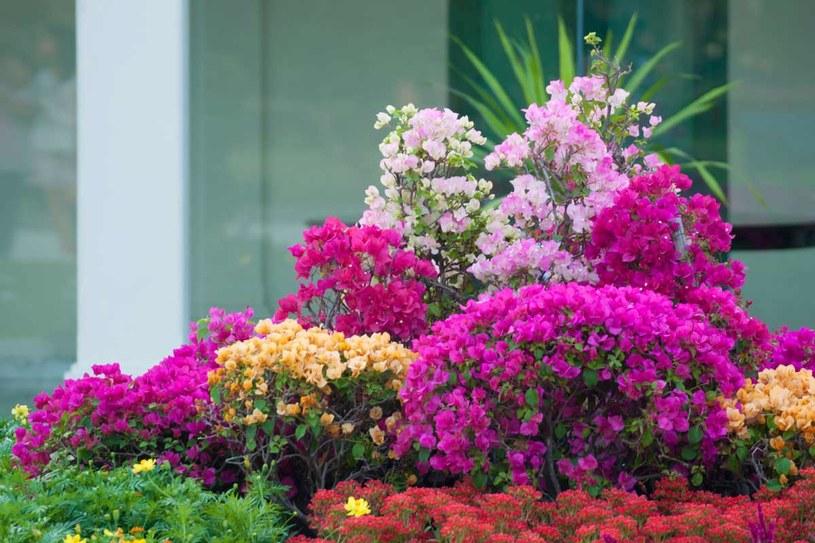 Czerwiec to okres intensywnego kwitnienia /123RF/PICSEL