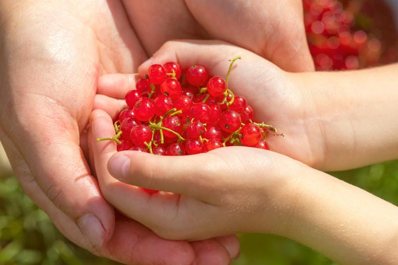 Czerwona porzeczka to świetny składnik diety dla osób będących na diecie odchudzającej /123RF/PICSEL