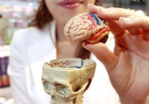 Część neuronów w ludzkim mózgu działa jak użytkownicy Facebooka /AFP