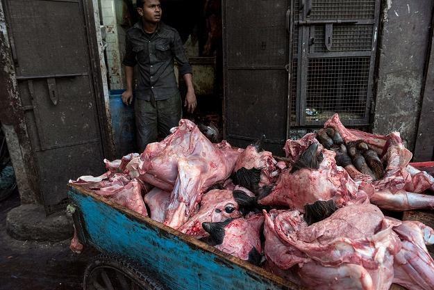 Część skonfiskowanego mięsa, wyceniono na 480 mln USD /AFP