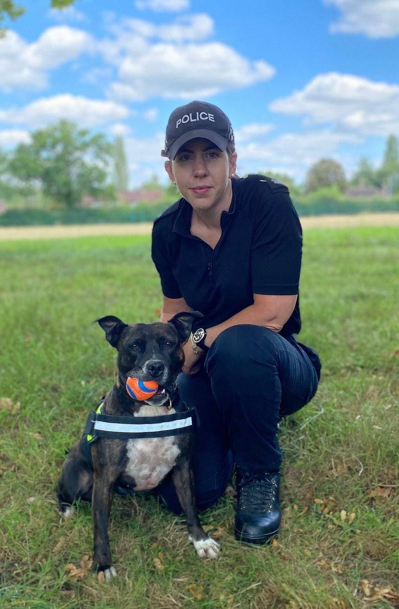 Człowiek i pies stanowią doskonałą drużynę /East News