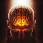 Człowiek korzysta tylko z 10 proc swojego mózgu - czy to prawda?
